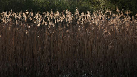 The grass in a swamp under the sunlight at daytime - nice for backgrounds and wallpapers