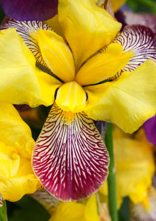 A vertical selective focus shot of a Giardino dell iris in Lori province in Armenia