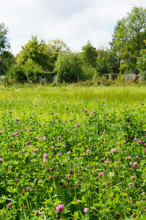 A vertical shot of small purple wild flowers growing in the sunny field