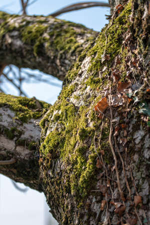 A vertical shot of a tree with moss growing 免版税图像