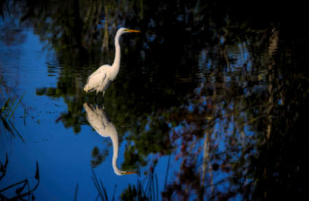 A selective focus shot of an egret standing in the water