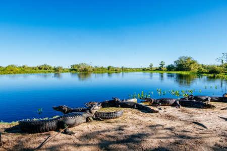 A lake surrounded by American crocodiles and greenery under the sunlight and a blue sky