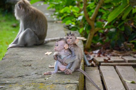 A view of baby monkeys in the zoo