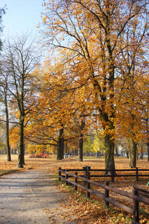 The beautiful shot of the park with colorful trees - autumn view