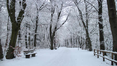 A pathway surrounded by trees covered in the snow in a forest at daytime