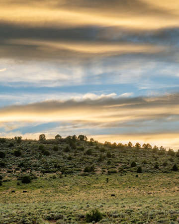 A vertical shot of a forested hill under a cloudy sky at sunset
