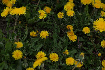 A closeup shot of blooming yellow flowers in the greenery