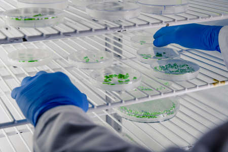 A closeup shot of a laboratory worker examining a green substance on petri dishes while conducting coronavirus research Banco de Imagens