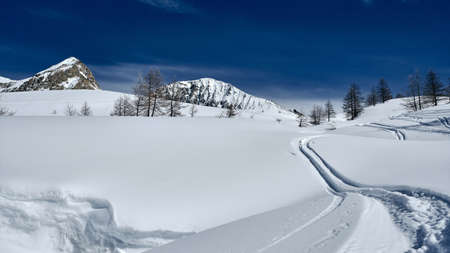 A low angle shot of a forested mountain covered in snow and paths under a blue sky