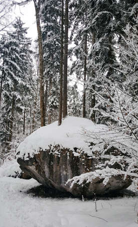A beautiful view of the beautiful forest during winter covered in snow Banco de Imagens