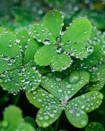 A selective focus shot of dewdrops on the green leaves