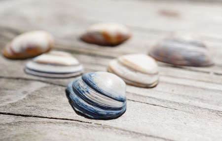 A closeup shot of seashells on a wooden background