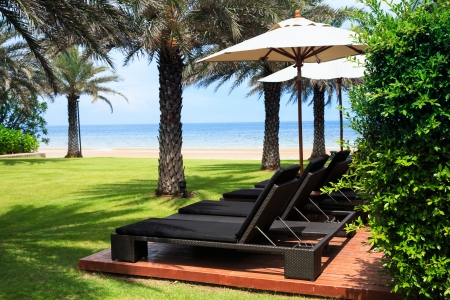 Beach chairs and umbrella in lawn with palm trees photo
