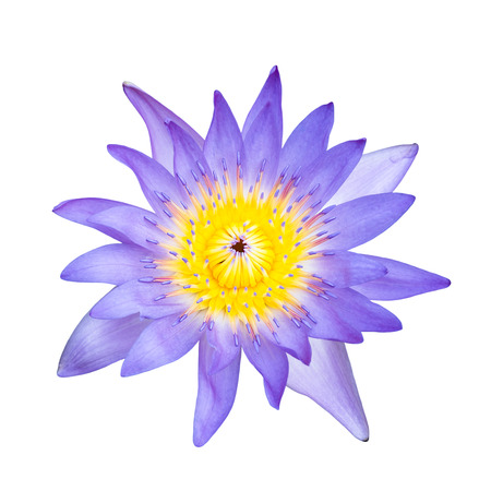 Top view blue water lilly on white background photo