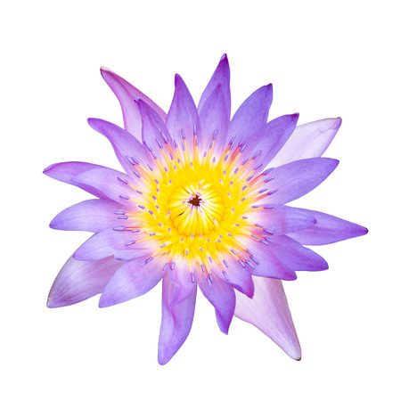 Top view violet water lilly on white  photo