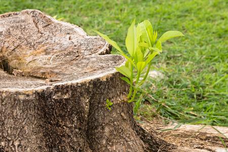 인내를위한 그루터기 개념에서 자라는 작은 나무