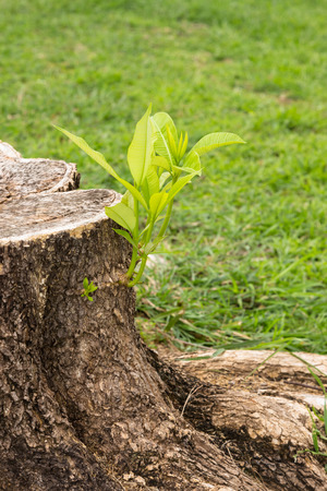 hardship: Small tree grow from stump concept for perseverance