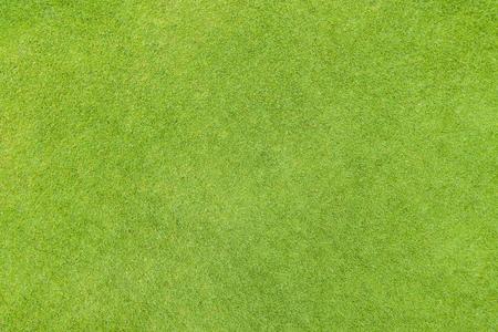 Golf fairway grass texture top view