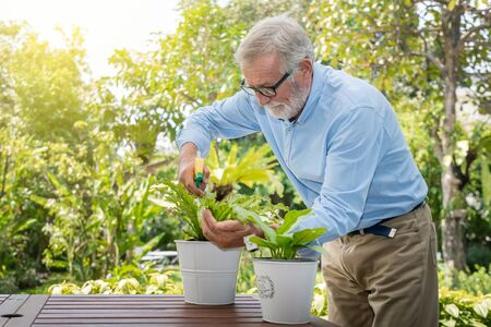 Senior old man eldery puring water and taking care small tree on table in garden