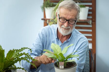 Senior old man eldery puring water and taking care small tree on table Stock Photo