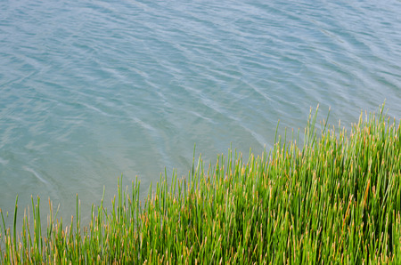 Grass Beside A Natural Pond In Outdoor of Summer. Stock Photo