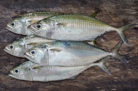 Fresh Sport-Bodied Mackerel for Cooking.