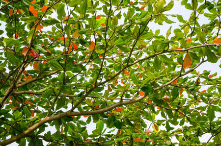 Foliages of Tree on the Fall Season.