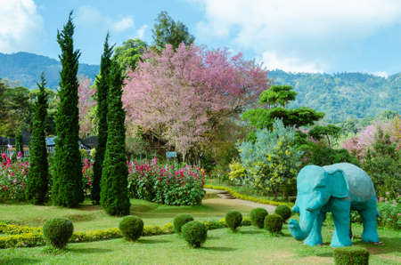 Scenery of Public Park on Mountain at Chiangmai Province of Thailand. Foto de archivo