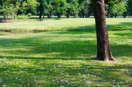 Tree Shadow on Green Lawn. Foto de archivo