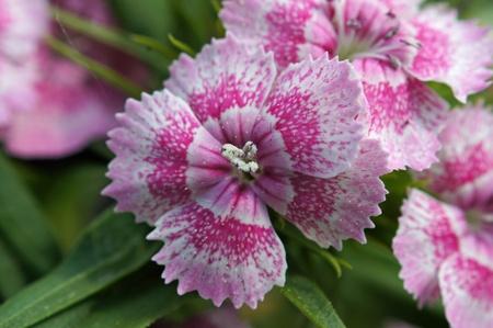 macr: Pink flower       Stock Photo