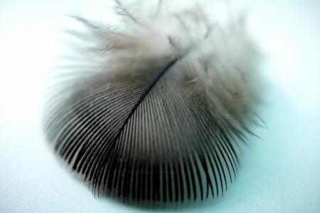floccus: Bird feather Stock Photo