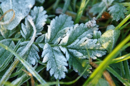 Green leave in winter with ice