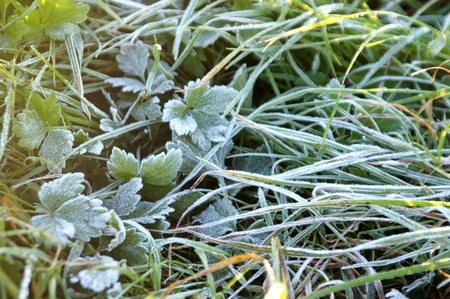 Frozen grass and icy leaves. Stock fotó