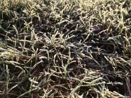 Icy grass in sunlight Stock fotó