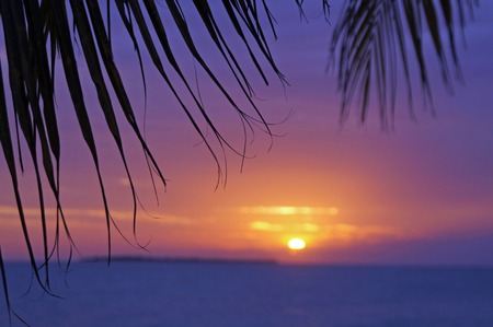 frond: A palm frond close at sunset