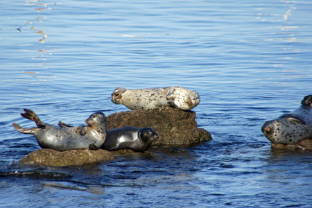 See seals on rocks in the water