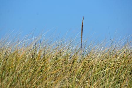 Ein Grashalm rat aus der Menge hervorOne blade of grass is different Stock Photo