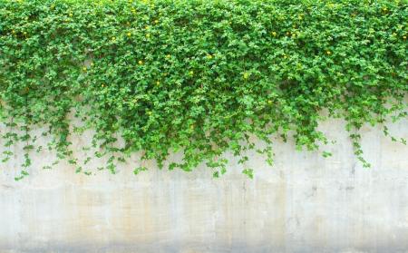 壁に観賞用植物 写真素材