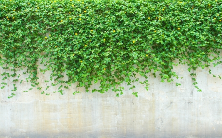 pared roja: plantas ornamentales en la pared