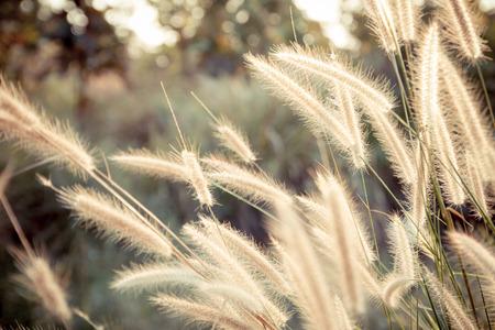 limp: grass flowers backlit sunset in vintage style