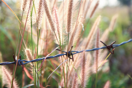 Flowers with barbed wire photo