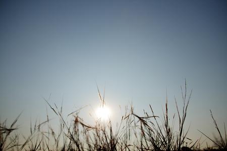 grass flowers backlit sunset Stock Photo