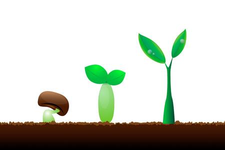 Evolution little plant seedling on white background Illustration