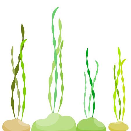 alga: algae in the sea Vector illustration