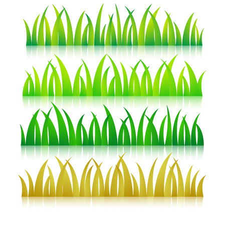 sedge: Grass colorful vector illustration