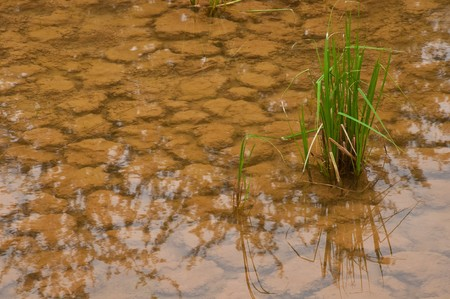 hydrophyte: Cracked soil in water after rain. Stock Photo