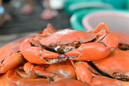 serrated: close up steamed serrated mud crab, mangrove crab Stock Photo