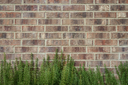 planar: background of random dark brown tone brick wall with green bush, pattern