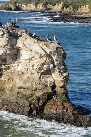 natural bridge: A number of birds on  Natural Bridge rock, Pacific Ocean along Big Sur National Forest.