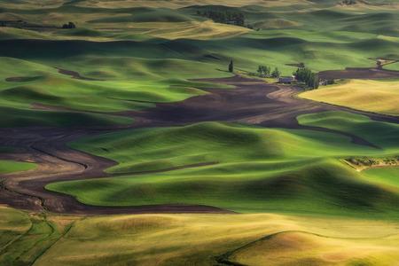 Sun은 Steptoe Butte, Washington에서 빛을 설정했습니다. 보리와 밀밭의 아름다운 풍경. 여름 여행 목적지.